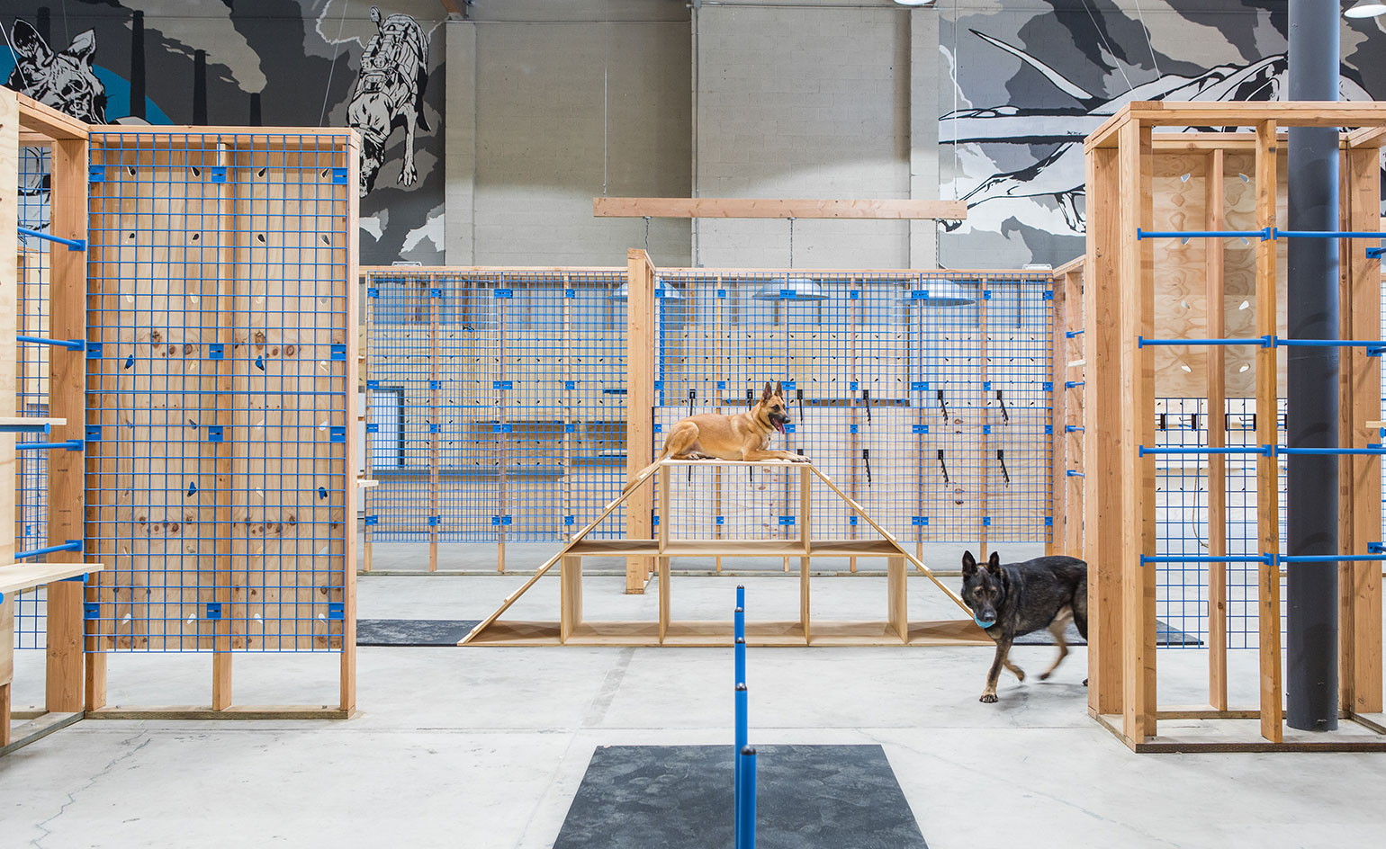 Blue Collar Working Dog Shop Review Los Angeles Usa