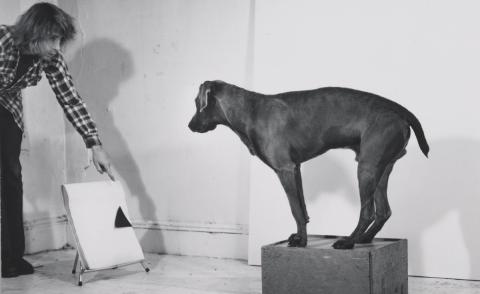 William Wegman gifts his entire short video catalogue to the Met