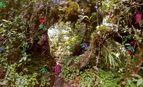 Camden Art Centre explores our deeply-rooted relationship with plant life