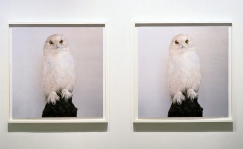 Roni Horn,Dead Owl, 1997 Two iris prints. Courtesy the artist and Hauser & Wirth. Roni Horn