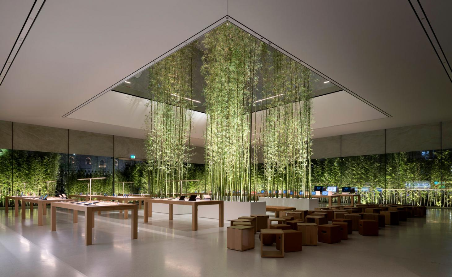 Cubic light wells are reinforced by smaller lights, greeted by dense bamboo plantings