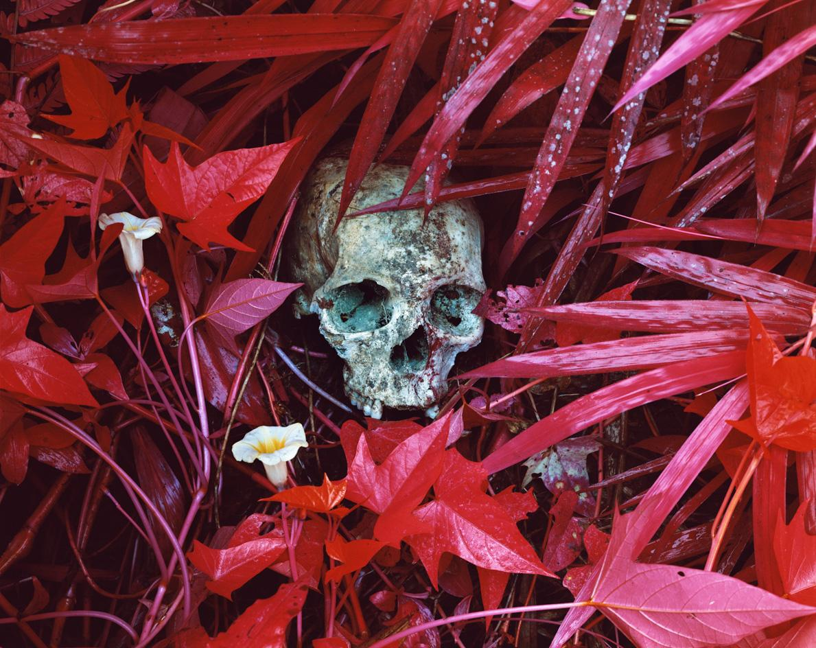 Of Lilies and Remains, Eastern Democratic Republic of Congo, © Richard Mosse, courtesy of the artist, DZ Bank Art Collection