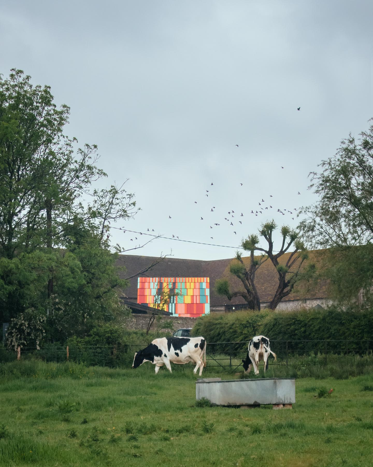 charleston outdoors stage as seen in green rural setting with cows on view