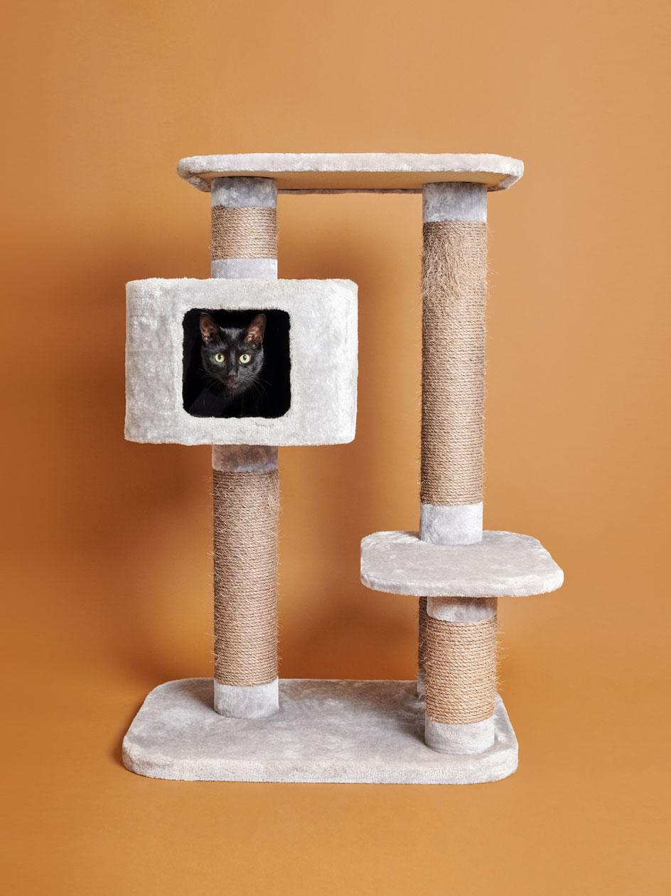 Cat photography by Pascale Weber shows cats playing in cat trees on colourful backgrounds in the photographer's new book For Cats Only