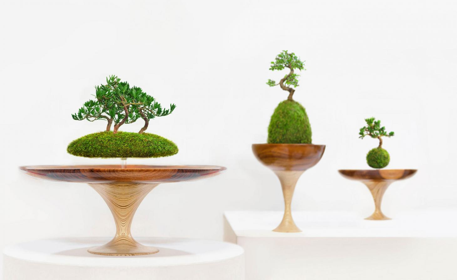 Plant pots in wooden bases