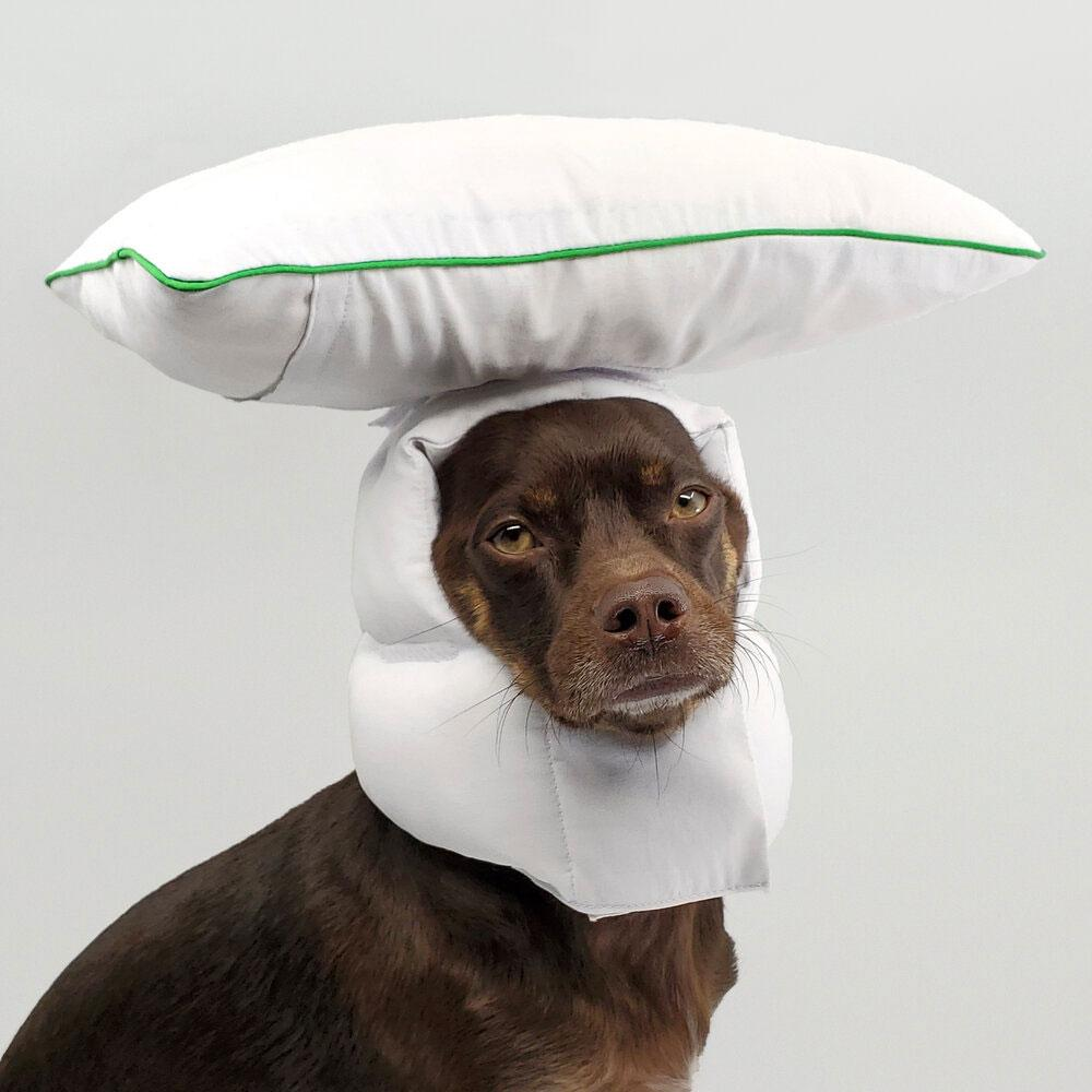 between two naps Sleepover XL dog head pillow which features a pillow on top of a dogs head