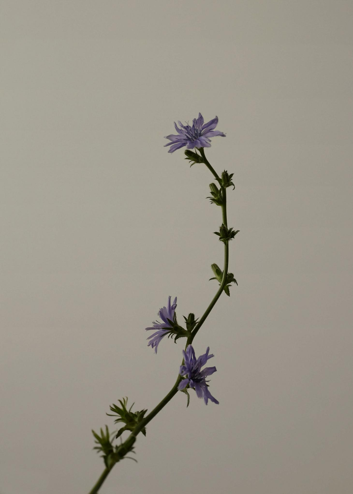 Image of purple flower with green steam against a grey background courtesy of Flomacy