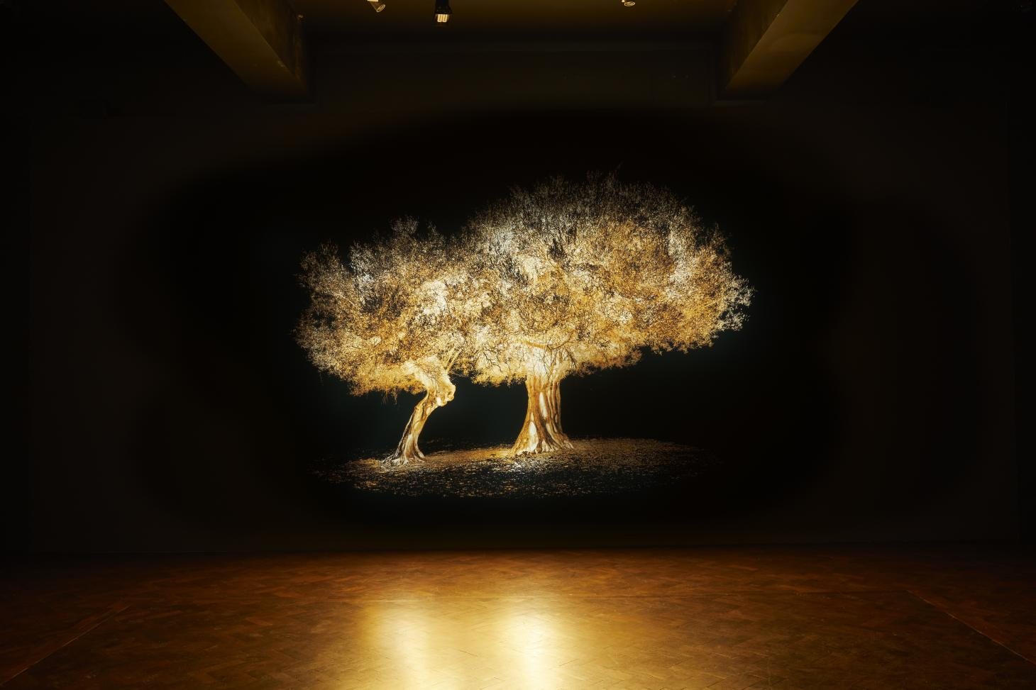 Projection of an olive tree, part of Greece Pavilion at London Design Biennale