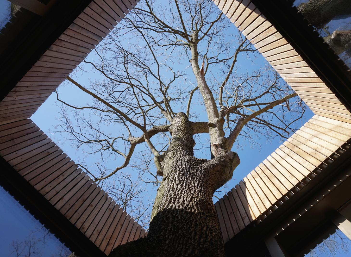 The House on the Lake was designed around an existing maple tree