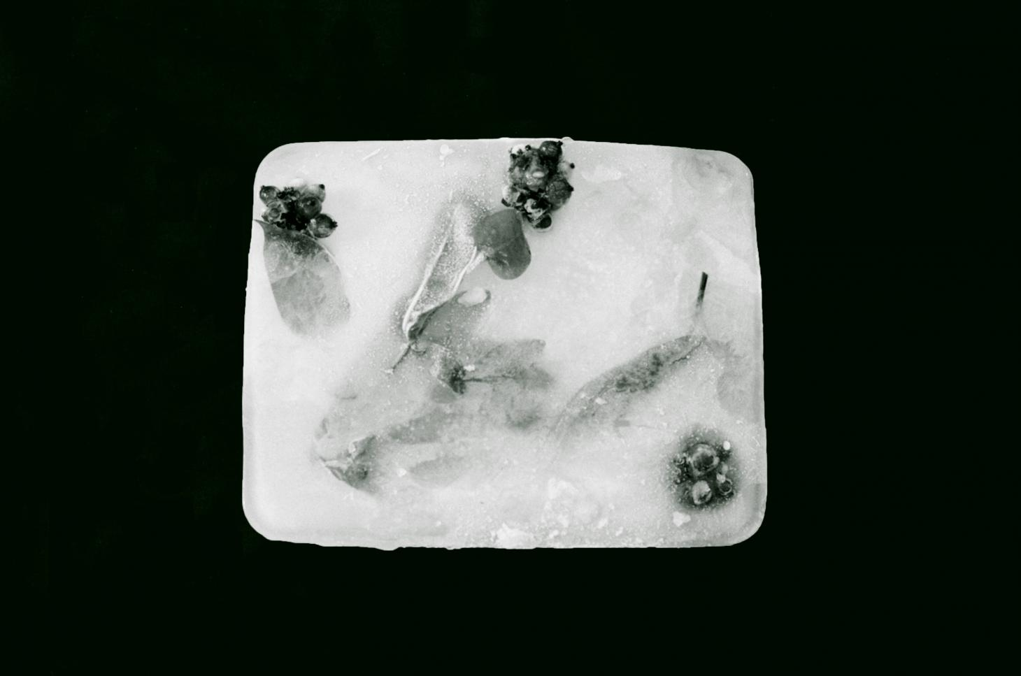 seated queen ice block with flowers in it against black background