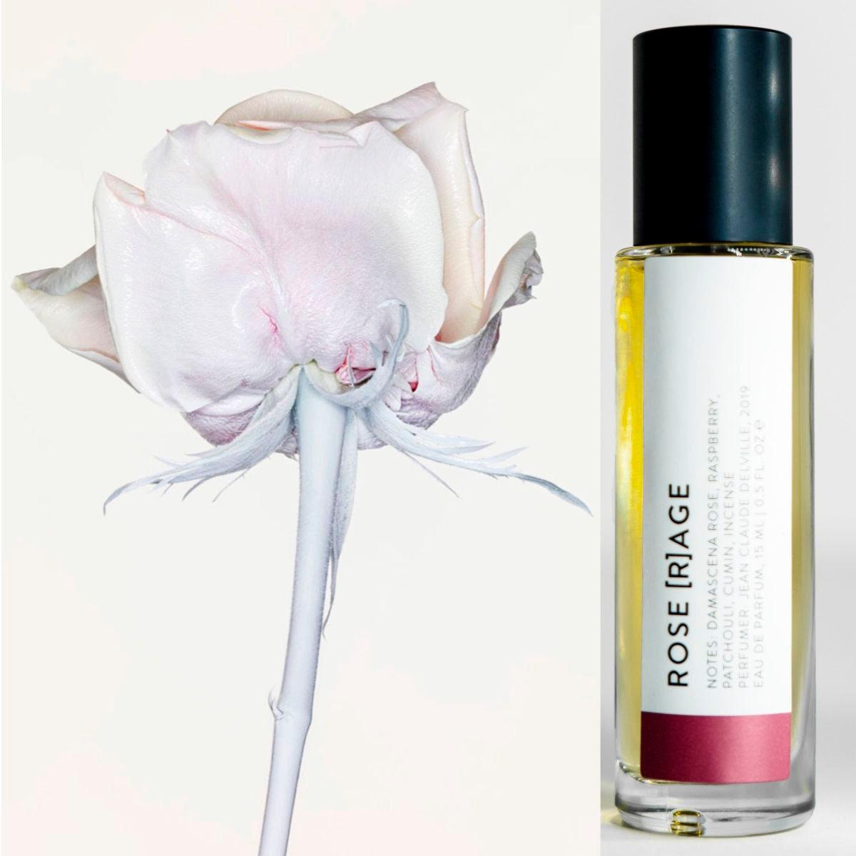 light pink rose with white stem by ben hasset, rose rage fragrance