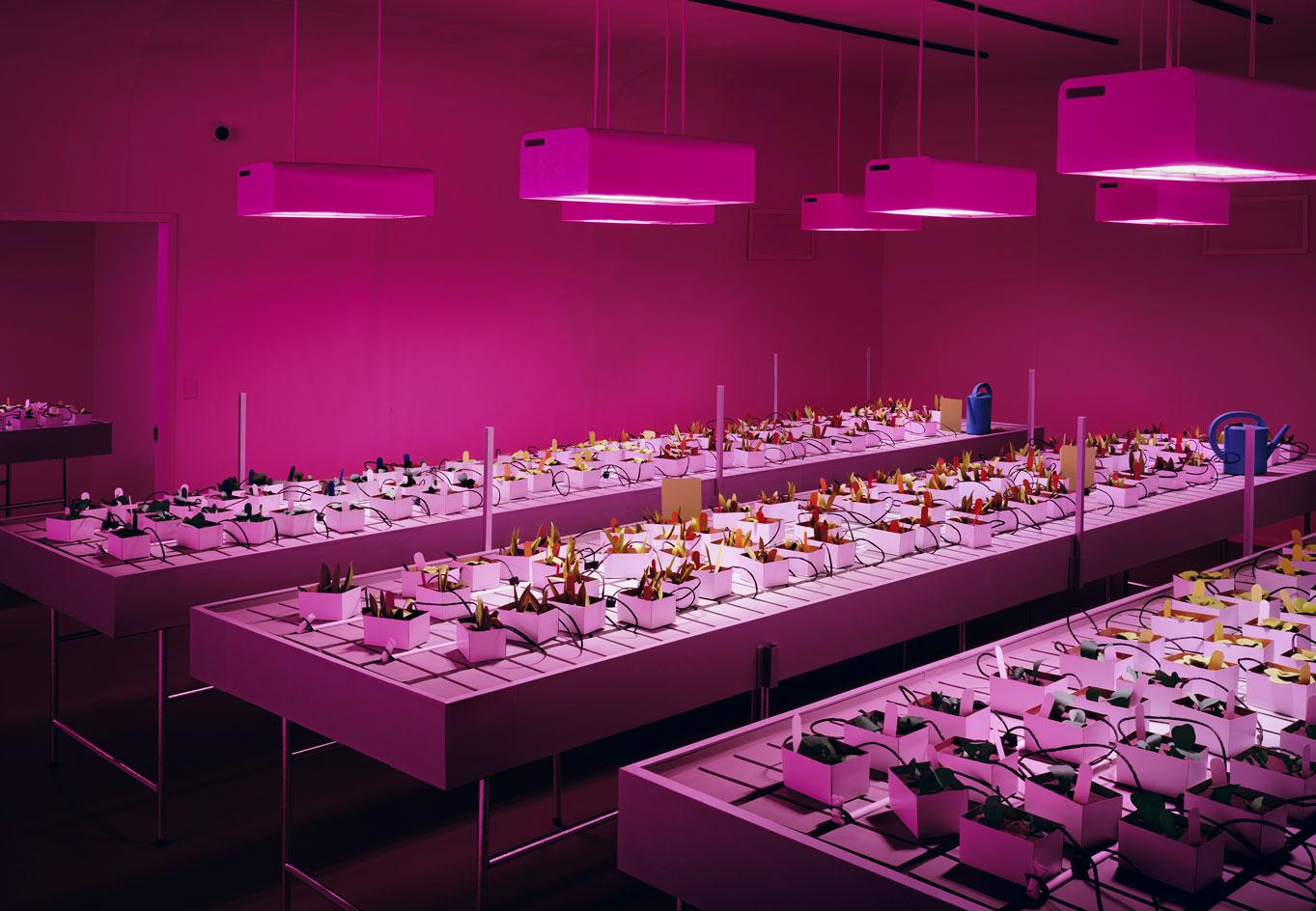 Thomas Demand,Nursery, 2020 C-print/Diasec which pictures a cannabis lab in Canada