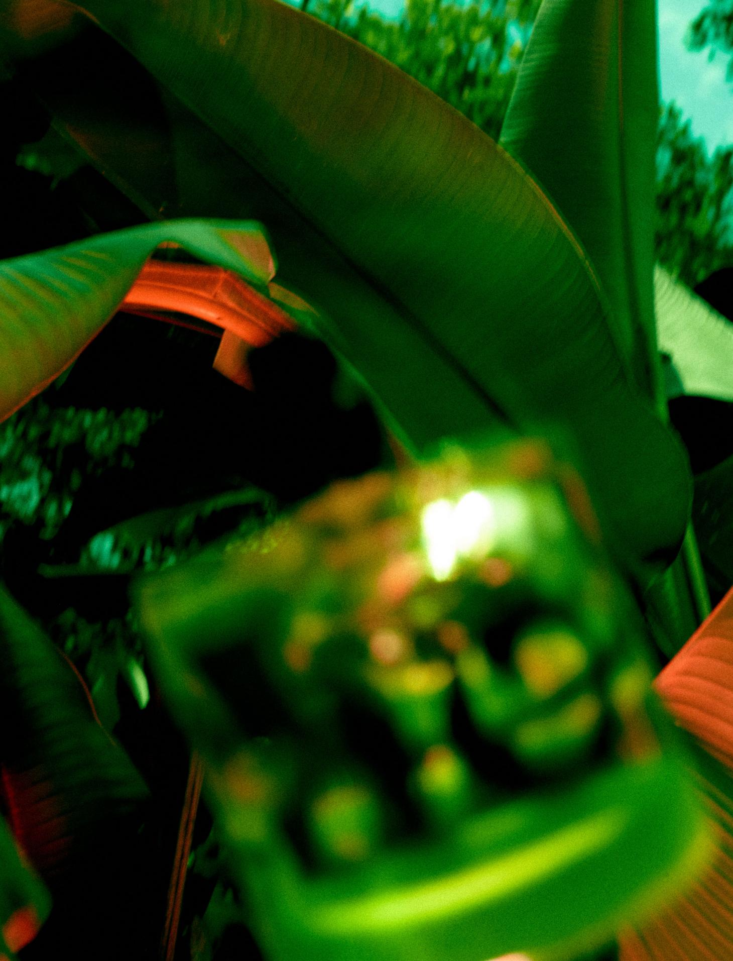 Photographby Lea Colombo fromVyrao's I Am Verdent campaignshowing perfume bottle amongst green leaves