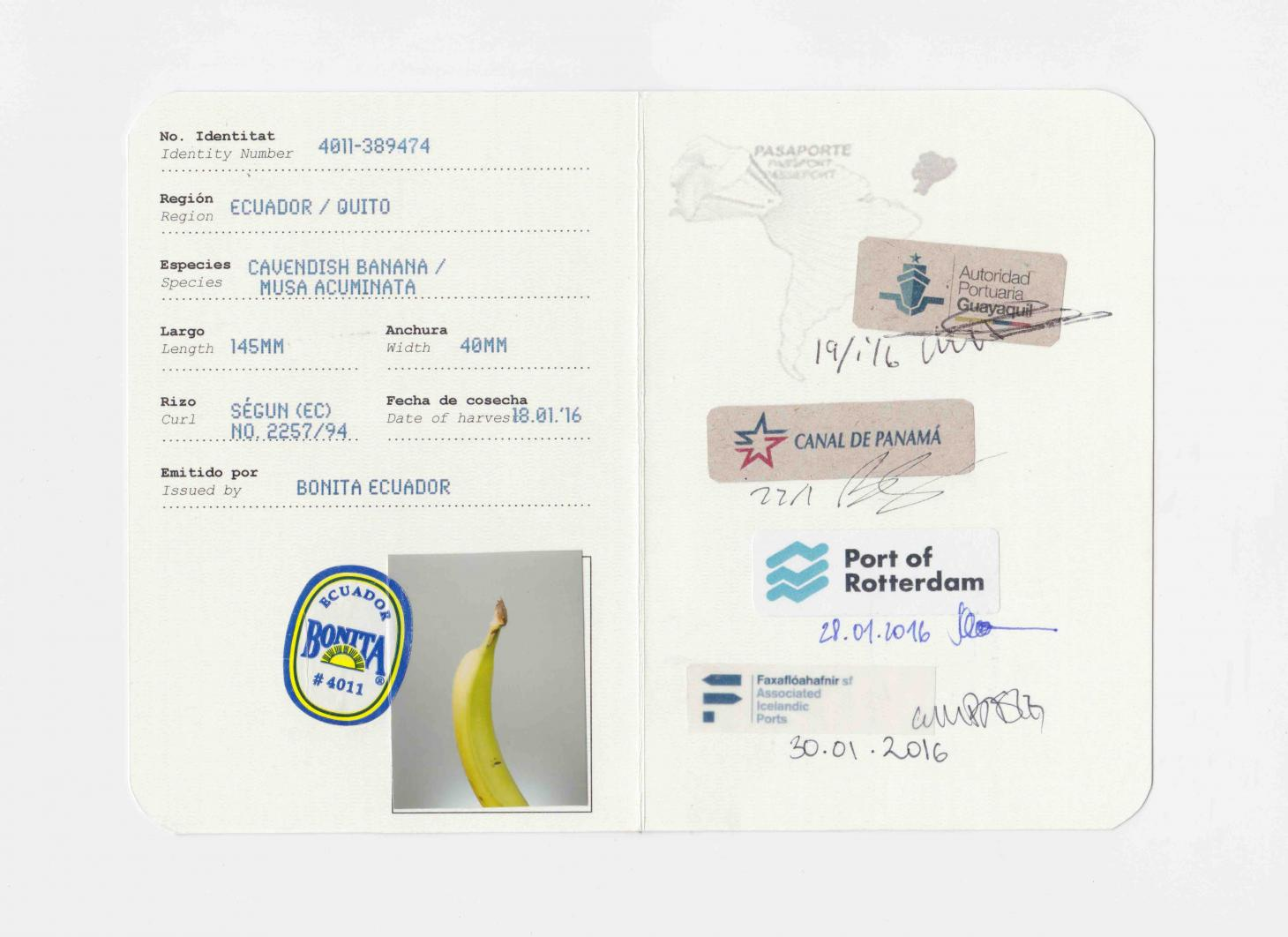 Banana passport with stamps to show its journey