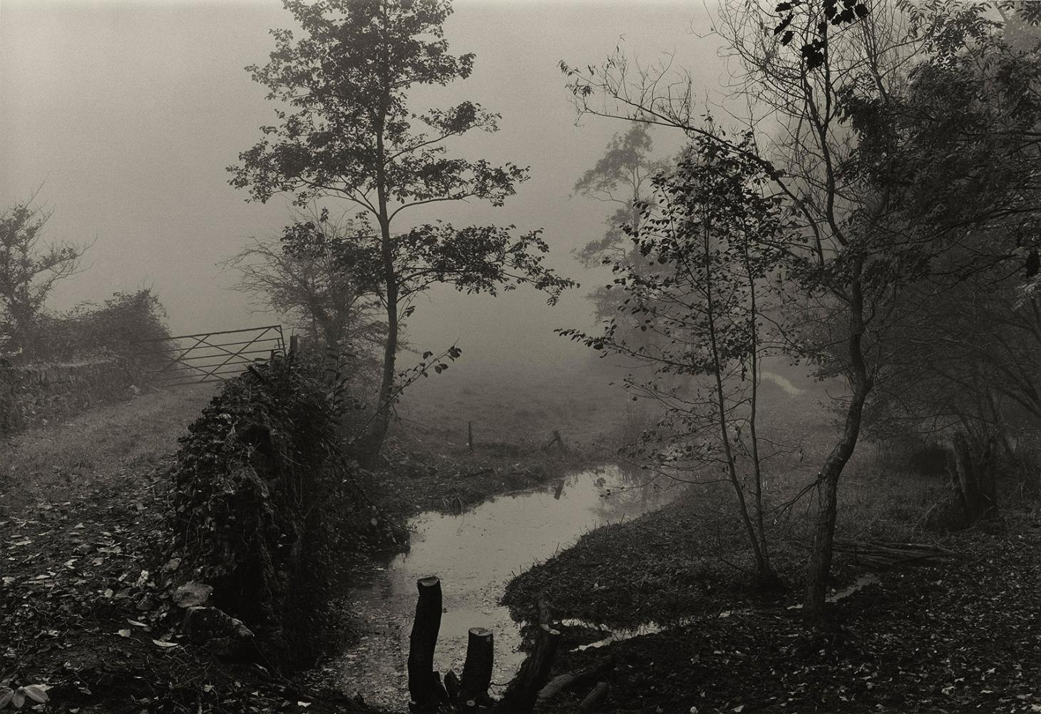 Woods near My House, Somerset, c1991, by Don McCullin