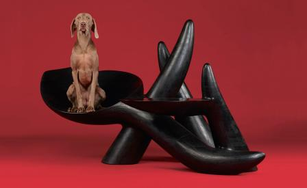 William Wegman Shoots Distinguished Dogs On American Design Just For Us